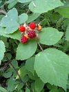 Hebiberry